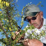 Garden Workshop: Pruning Fruit Tree