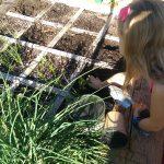 Children's Garden Workshop: Planting Winter Vegetables