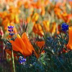 Collect Wildflower Seeds