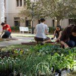 Creating an Edible Garden