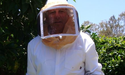 Got Honeybees? – The Beginning of a New Hobby
