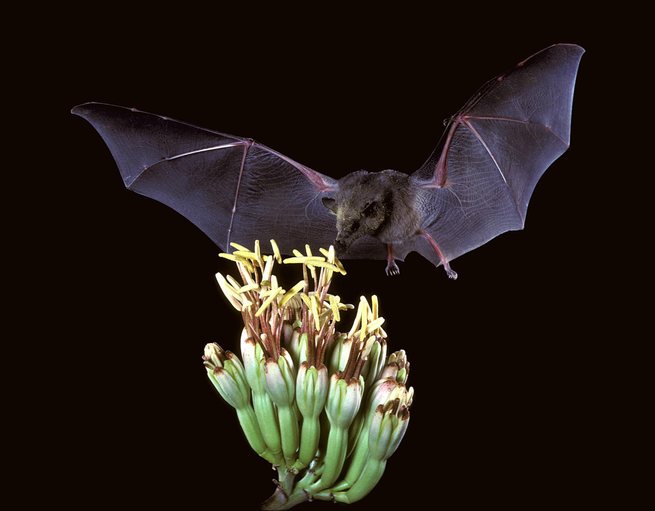 Summer Bat Walks