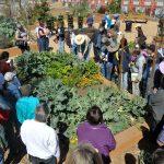 Children's Garden Workshop: The Amazing Gourd