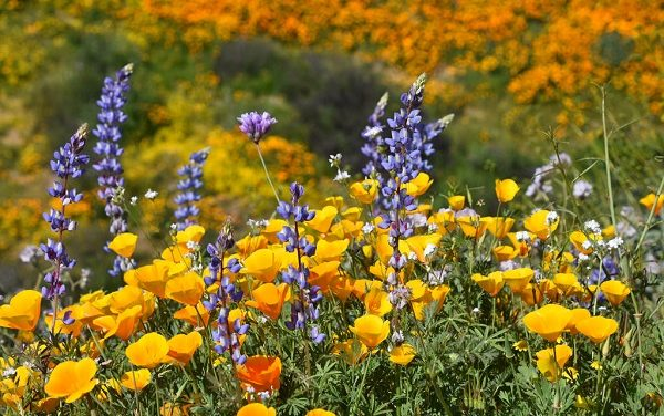 February 27th:  Plant & Protect Wildflowers at the Native Seed Farm